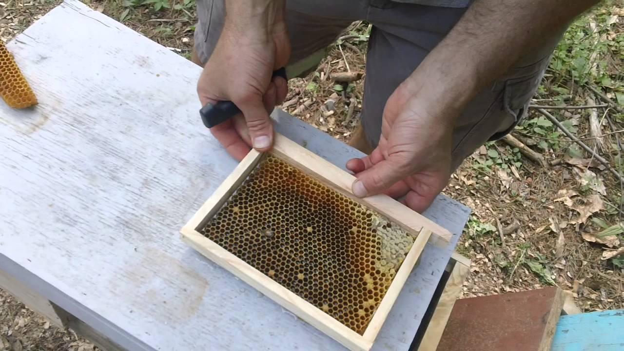 Fat Bee Man - Mini Mating Nuc Setup - Youtube-7466