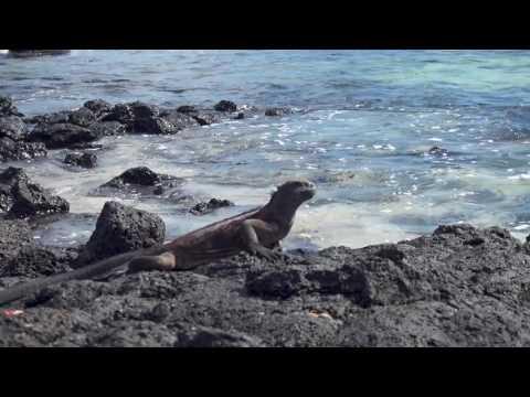 Galapagos Islands, Ecuador Trip 2017 - GAdventures