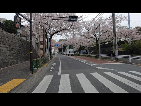 4K Driving from Tokyo Suburbs to Central Tokyo: JAPAN Slow TV ASMR Drive - No Music (POV) World