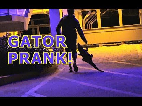 GATOR PRANK!!!