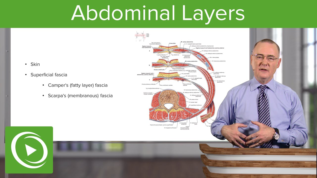 Layers of the Abdominal Wall – Anatomy | Lecturio - YouTube