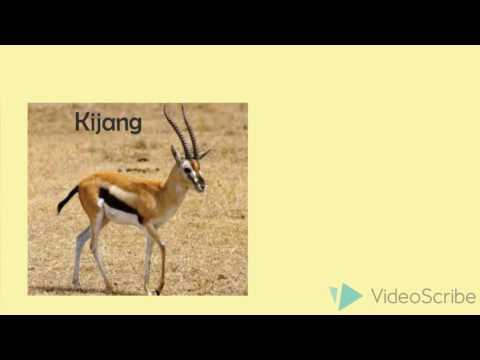 Media pembelajaran audio visual tentang Persebaran flora dan fauna di indonesia