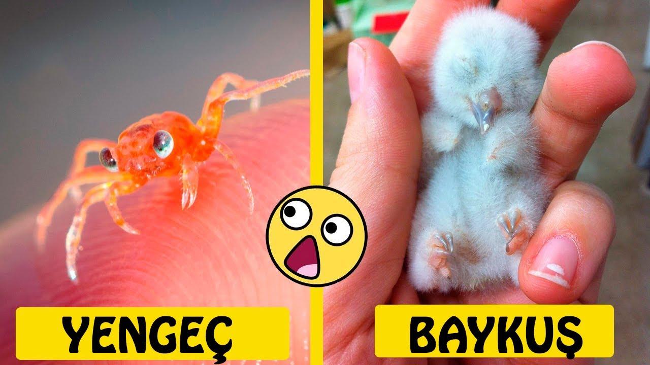 Download Yeni Doğan Hayvanların Nasıl Göründüğünü Biliyor musun? Görmen Gerek