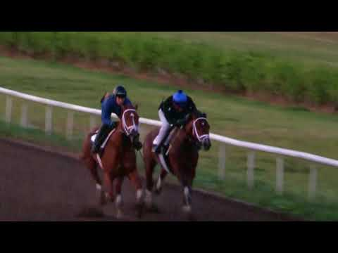 Audible works at Palm Beach Downs ahead of the Xpressbet.com Florida Derby