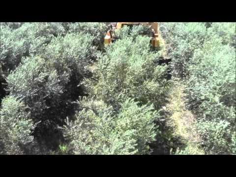 Georgia Olive Farms HD