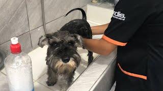 Aprende a bañar a tu mascota en casa