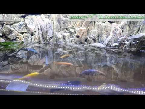Fondo 3D en Acuario Malawi 720 Litros semi-plantado    AquaTips