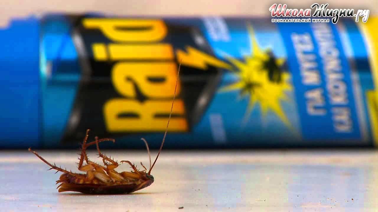Раптор система ликвидации насекомых аквафумигатор ➤ наличие в. Гарантия ✓ клубная цена ниже ✓ звоните круглосуточно на бесплатный.