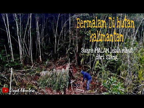 BUSHCRAFT INDONESIA OVERNIGHT    Bermalam Hutan Kalimantan Yg Jarang Di Jalam    Survival \u0026 Cooking