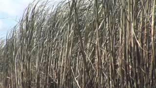 Documentário I À Sombra de um Delírio Verde