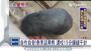 自作自受!泰男逗弄黑熊 遭咬15分鐘獲救|三立新聞台