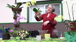 Phalaenopsis Orchid Lecture for Salmon Arm, Garden Club