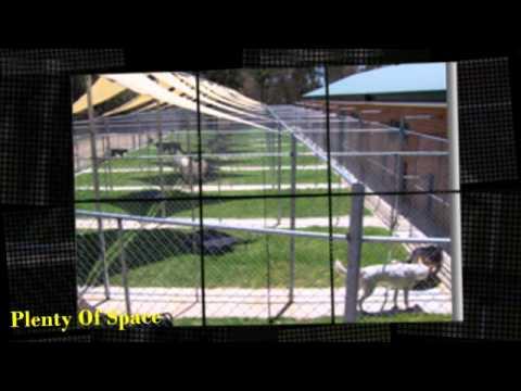 Dog Boarding Kennels Melbourne North