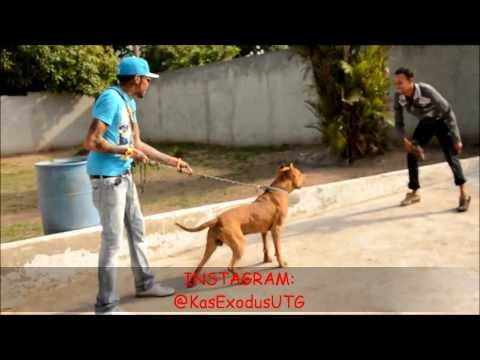 Vybz Kartel and Friends Having Fun. Playing With His Pitbull #HappyTimes