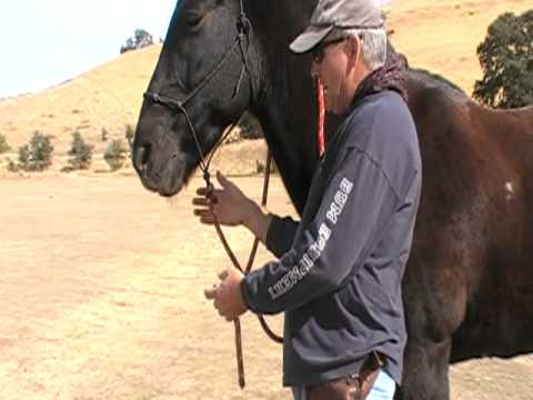 How to connect a Horse Lead Rope To Halter For Reins - Rick Gore Horsemanship