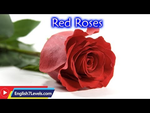 Learn English Through Story ★ Subtitles:Red Roses (level 0)