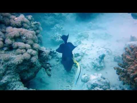 Red Sea Deep South (MV Tala) 2013