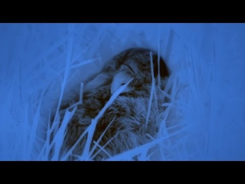 Thermal Imaging - The Great British Year: Episode 1 - BBC One