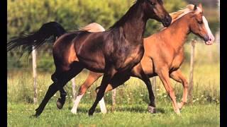 Далеко далеко ускакала в поле молодая лошадь!!!