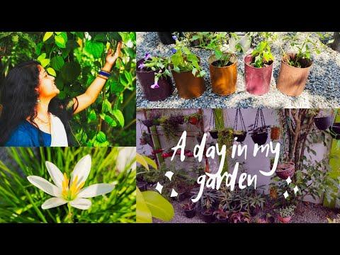 ഗാർഡനിലെ ചെറിയ പണികൾ | A day in my garden | Garden Vlog