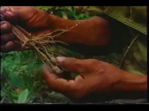 Don Emilio & His Little Doctors (1982), by Luis Eduardo Luna [Complete Film]