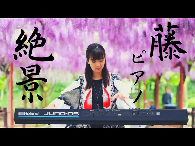 【絶景×ピアノ】Japanese Beautiful scene drawing pianist Vol.21 山地真美 【上海嘉定紫藤園】風景秀麗的日本和鋼琴音樂