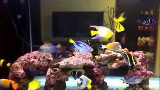 My Marine Tank at 10 mths.wmv