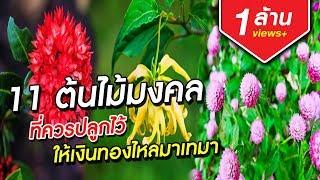 11 ต้นไม้มงคลที่ควรปลูกไว้ ให้เงินทองไหลมาเทมา | Aranya Channel