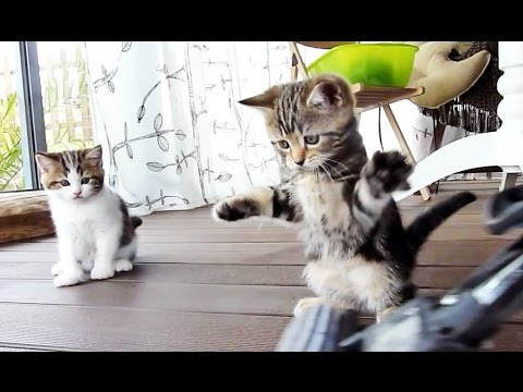 Cute and Funny Kitten dancing with a mop
