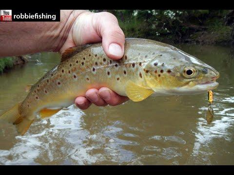 stream trout fishing basics  Its raining trout