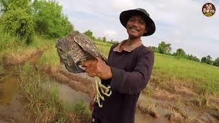 นกอะไรนี้โคตรใหญ่   ยามบ่วงนก ได้นก ยามบ่วงหนู ได้หนูหมานคัก หาอยู่หากินแบบ วิถีอีสาน