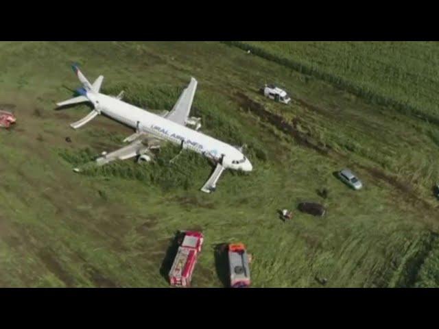 הנס בשדה התירס ברוסיה: מטוס נחת בשדה חקלאי בעקבות פגיעת שחפים