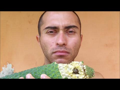 Frutas exoticas monstera deliciosa planta y fruto youtube - Frutas tropicales y exoticas ...