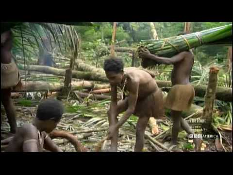 Korowai Tribe - Building a new tree house