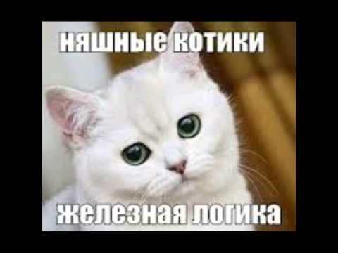 Няшные котята картинки!