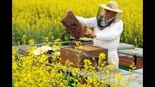 Honing slingeren en Nostalgische kermis