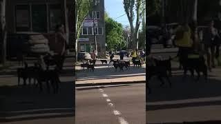 Мой город Н: Стаи бродячих собак мешают проходу жителям города