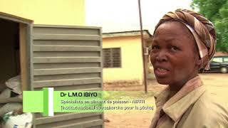 NIGERIA   L'ALIMENT DE POISSON