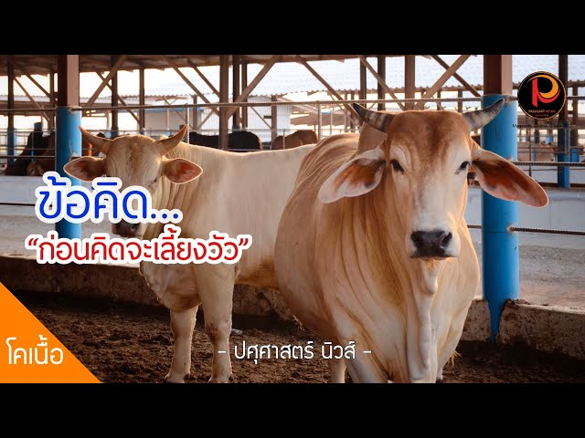ข้อคิด..ก่อนคิดที่จะเลี้ยงวัว ต้องทำอย่างไร - ปศุศาสตร์ นิวส์