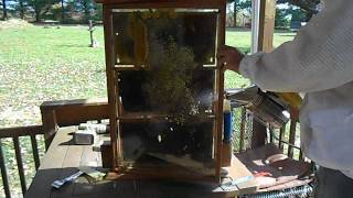 Bee Tv! Observation Hive Maintenance