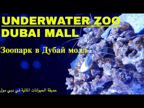 ОАЭ- Зоопарк в Дубай молл- The Dubai mall Underwater Zoo