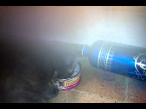 Pippin lickin wet food can