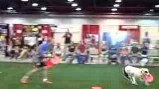 Russ & Mariah - CO Pet Expo - disc dog demo