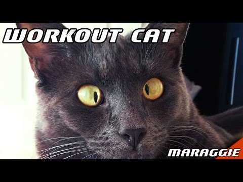 Workout Cat - when we have a break from workshop :)