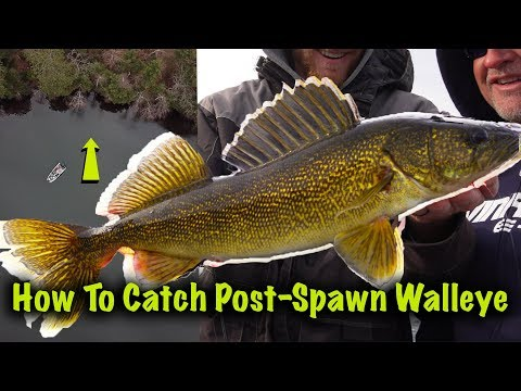 Post-Spawn Walleye In Wisconsin!