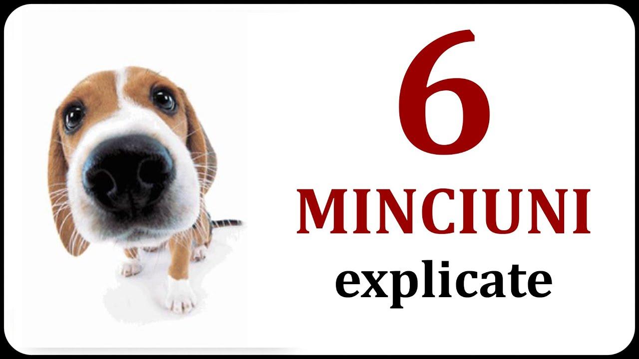 6 MINCIUNI explicate