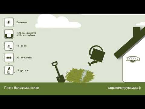 Многолетняя быстрорастущая живая изгородь: вечнозеленые культуры и особенности ухода за ними