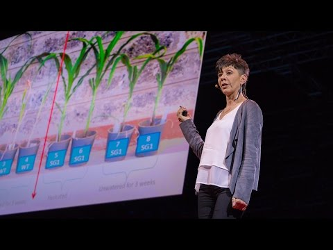 How we can make crops survive without water | Jill Farrant