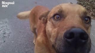 Как познакомить собак? Социализация щенканемецкой овчарки 5 месяцев