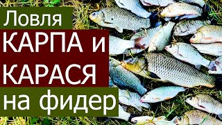 ЛОВЛЯ КАРПА И КАРАСЯ НА ФИДЕР ЛЕТОМ НА РЕКЕ ДНЕСТР